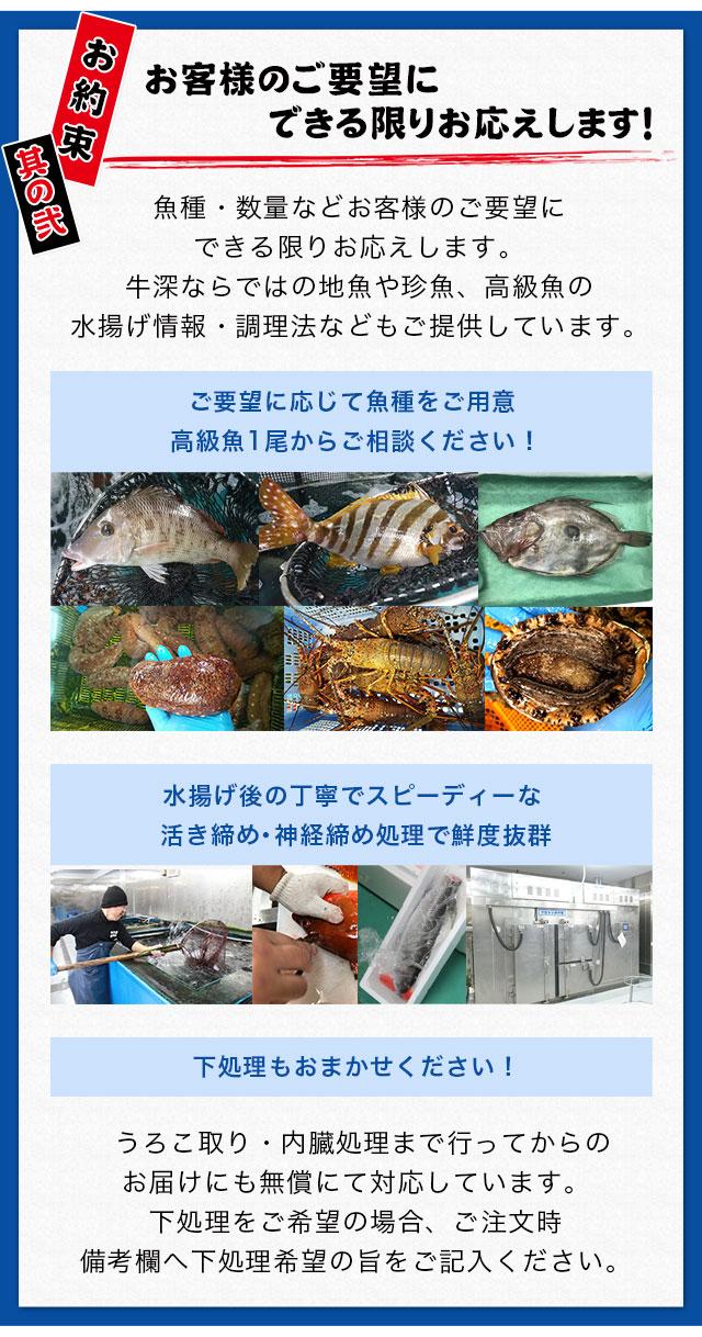お客様のご要望にできる限りお応えします。牛深水産のお約束。プロの目で激選した魚をお届けします。ご要望に応じて魚種をご用意・高級魚1尾からご相談ください。水揚げ後の丁寧でスピーディーな活き締め・神経締め処理で鮮度抜群。下処理もおまかせください!