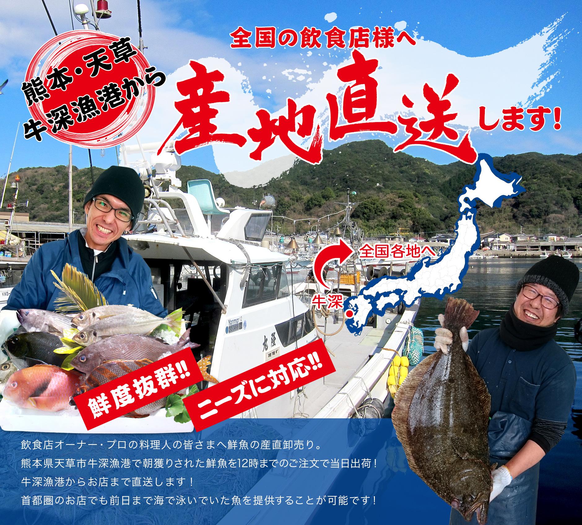 熊本・天草・牛深漁港から全国の飲食店様へ産地直送します!飲食店オーナー・プロの料理人の皆さまへ鮮魚の産直卸売り。熊本県天草市牛深漁港で朝獲りされた鮮魚を12時までのご注文で当日出荷!牛深漁港からお店まで直送します!首都圏のお店でも前日まで海で泳いでいた魚を提供することが可能です!