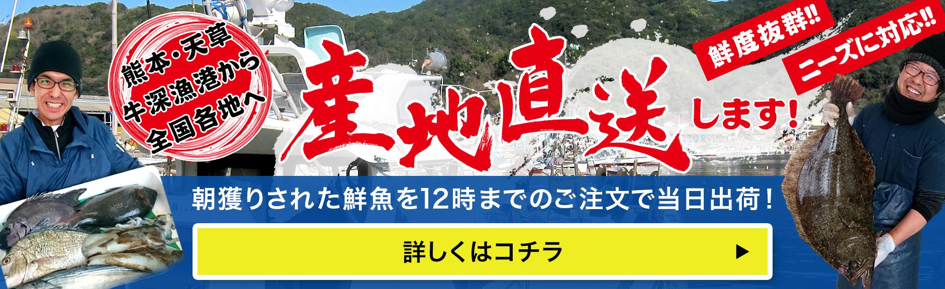 熊本・天草・牛深漁港から全国の飲食店様へ産地直送します!朝獲りされた鮮魚を12時までのご注文で当日出荷鮮度抜群ニーズに対応